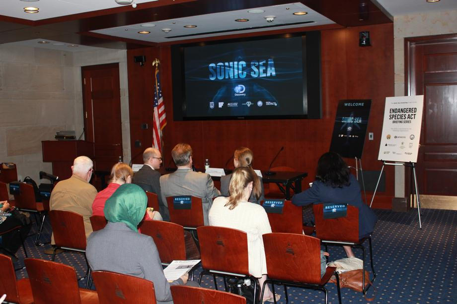 Screening on how ocean noise effects marine species